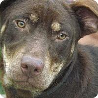 Adopt A Pet :: Finn - Citrus Springs, FL