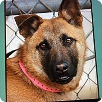 Adopt A Pet :: ARCHIE VON ANWAHL - Los Angeles, CA