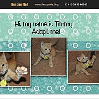 Adopt A Pet :: Timmy - Hurricane, UT