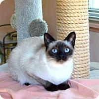 Adopt A Pet :: Mooshoo - Pinckney, MI