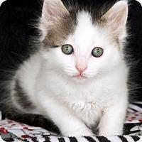 Adopt A Pet :: Steve - St Louis, MO