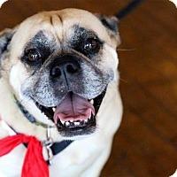 Adopt A Pet :: Buddy - Grand Rapids, MI