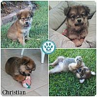 Adopt A Pet :: Christian - Kimberton, PA