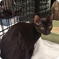 Adopt A Pet :: Fisher - Berkeley Hts, NJ