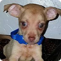 Adopt A Pet :: Zion - Phoenix, AZ