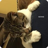Adopt A Pet :: SERINE - Hibbing, MN