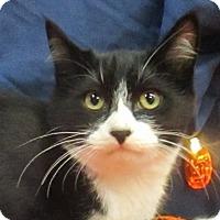 Adopt A Pet :: Espresso - Lloydminster, AB