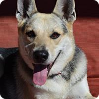 Adopt A Pet :: Hans - Gretna, NE