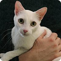 Adopt A Pet :: Naomi - Rochester, NY