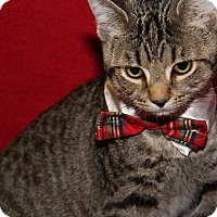 Adopt A Pet :: Franklin (Neutered) - Marietta, OH