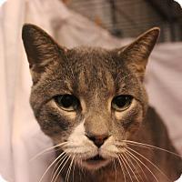 Adopt A Pet :: Chance - Jerseyville, IL
