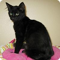 Adopt A Pet :: Ali - Georgetown, TX
