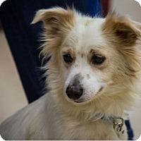 Adopt A Pet :: Puka - Hillside, IL