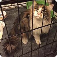 Adopt A Pet :: Mistletoe - Glendale, AZ