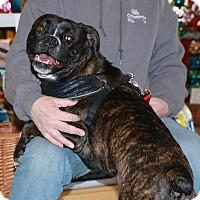 Service Dog Adoption Minnesota