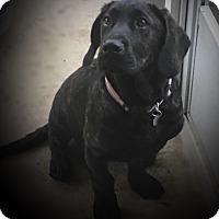 Adopt A Pet :: Sherman - Irmo, SC