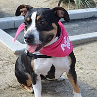 Adopt A Pet :: Butter Cup - Sherman Oaks, CA