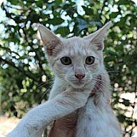 Adopt A Pet :: Martin - Santa Monica, CA