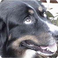 Adopt A Pet :: Buddy - Orlando, FL