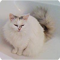 Adopt A Pet :: Kat - Bonita Springs, FL