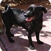 Adopt A Pet :: N's Natalie - Las Vegas, NV