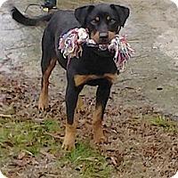 Adopt A Pet :: Alice - Wedowee, AL
