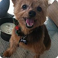 Adopt A Pet :: Yoshi - Gulfport, FL