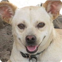 Adopt A Pet :: Ringo - Leming, TX
