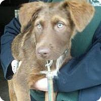 Adopt A Pet :: Bonnie - Stafford Springs, CT