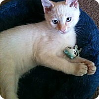 Adopt A Pet :: Flash - Davis, CA