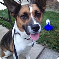 Adopt A Pet :: Sheba - Carey, OH