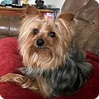 Adopt A Pet :: Toto - Redding, CA