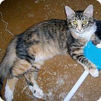 Adopt A Pet :: Callie1 - Scottsdale, AZ