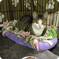 Adopt A Pet :: Judy - Bartlett, IL