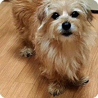 Adopt A Pet :: Pax - Andalusia, PA