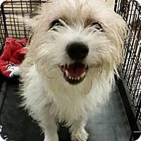 Adopt A Pet :: Skip - Gainesville, FL