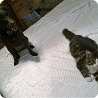Adopt A Pet :: Sophie & Norman - Kittery, ME