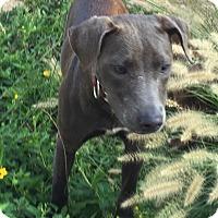Adopt A Pet :: ROXANNE - EDEN PRAIRIE, MN