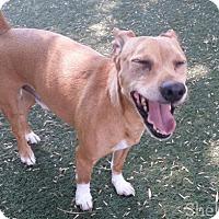 Adopt A Pet :: Sir - Meridian, ID