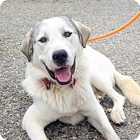 Adopt A Pet :: Terrence - Creston, BC
