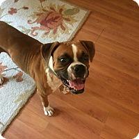 Adopt A Pet :: Banker - Austin, TX