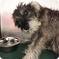 Adopt A Pet :: Dory - Fort Worth, TX