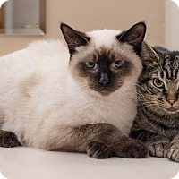 Adopt A Pet :: Sable and Bailey - Staten Island, NY