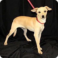 Adopt A Pet :: Pixie - Chester Springs, PA