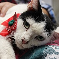 Adopt A Pet :: Ilene - Palmyra, NJ