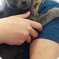 Adopt A Pet :: Bubbles - Lyons, IL