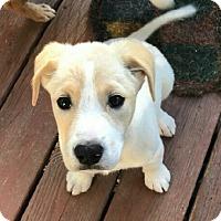 Adopt A Pet :: Ralph - Edisto Island, SC