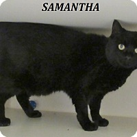 Adopt A Pet :: Samantha - Elizabeth City, NC