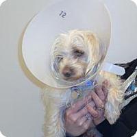 Adopt A Pet :: Frankie - Wildomar, CA