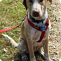 Adopt A Pet :: Alvin - Kingwood, TX